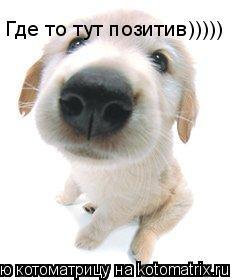 Котоматрица: Где то тут позитив)))))