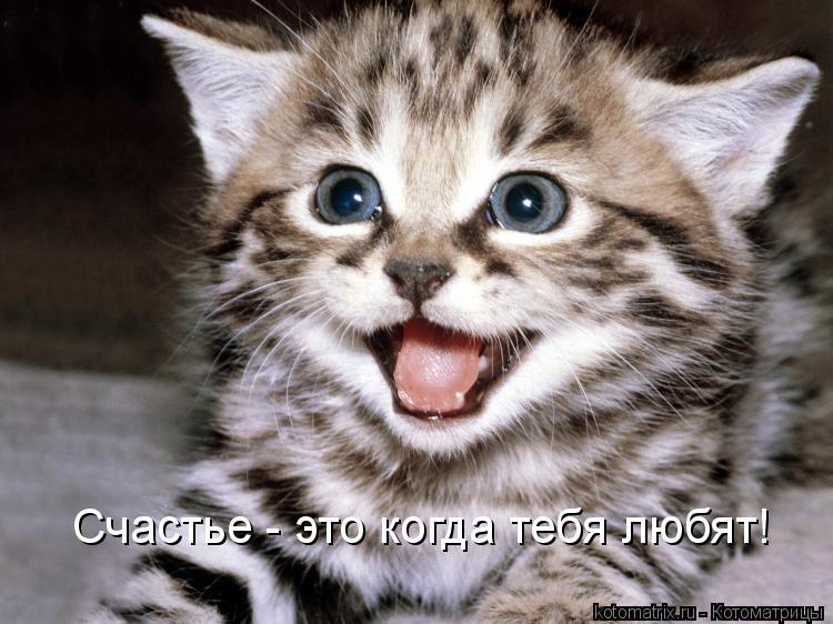 Котоматрица: Счастье - это когда тебя любят!