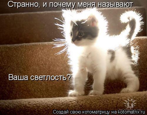 Котоматрица: Странно, и почему меня называют Ваша светлость?