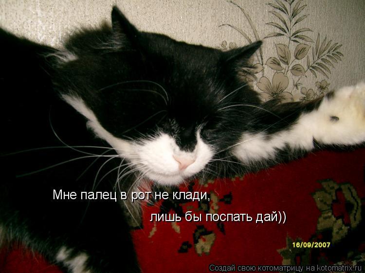 Котоматрица: Мне палец в рот не клади, лишь бы поспать дай))