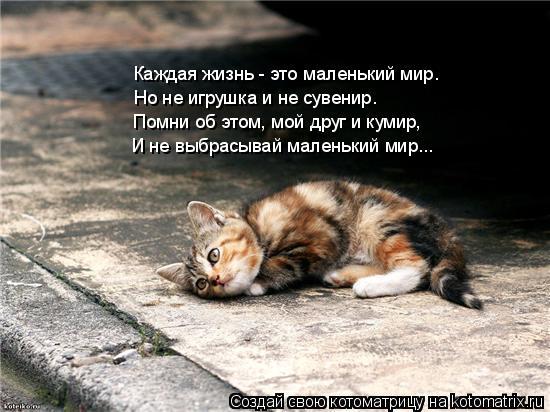 Котоматрица: Каждая жизнь - это маленький мир. Но не игрушка и не сувенир. Помни об этом, мой друг и кумир, И не выбрасывай маленький мир...