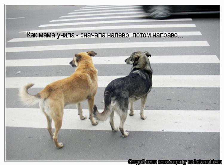 Котоматрица: Как мама учила - сначала налево, потом направо...