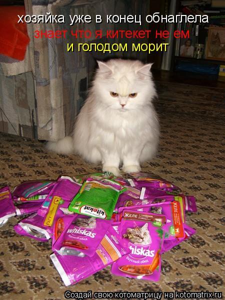 Котоматрица: хозяйка уже в конец обнаглела знает что я китекет не ем и голодом морит