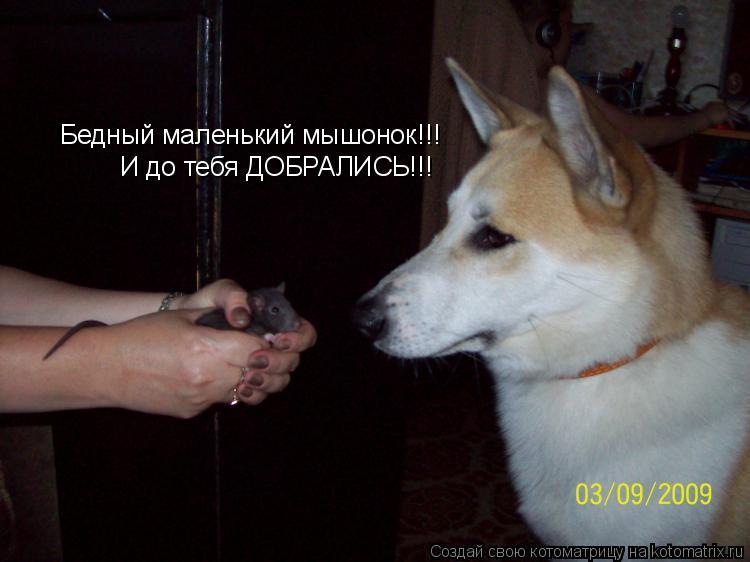 Котоматрица: Бедный маленький мышонок!!!  И до тебя ДОБРАЛИСЬ!!!