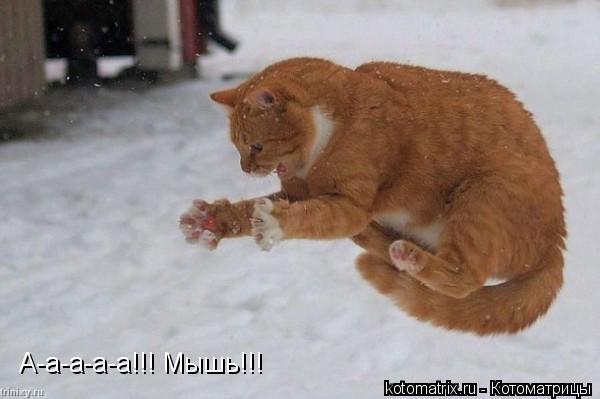 Котоматрица: А-а-а-а-а!!! Мышь!!!