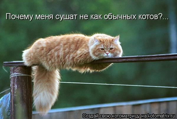 Котоматрица: Почему меня сушат не как обычных котов?...