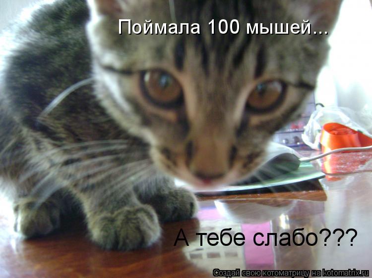 Котоматрица: Поймала 100 мышей... А тебе слабо???