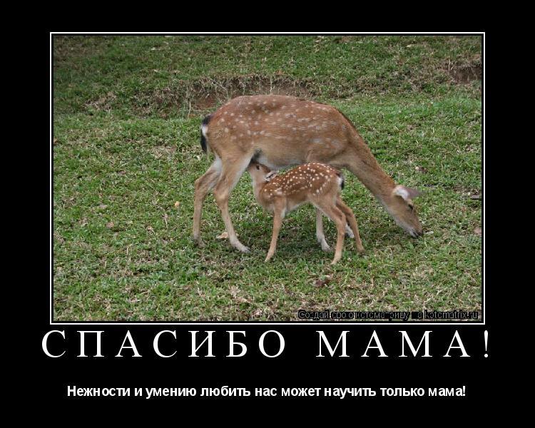 Котоматрица: Спасибо Мама! Нежности и умению любить нас может научить только мама!