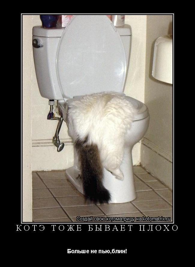 Котоматрица: КОТЭ ТОЖЕ БЫВАЕТ ПЛОХО Больше не пью,блин!