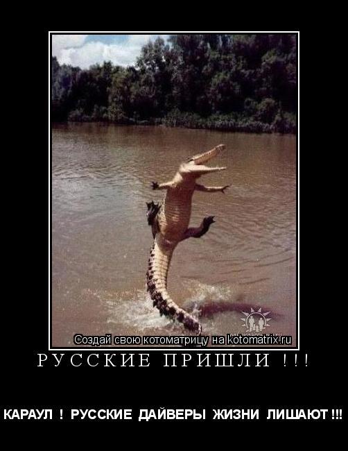 Котоматрица: русские пришли !!! КАРАУЛ  !  РУССКИЕ  ДАЙВЕРЫ  ЖИЗНИ  ЛИШАЮТ !!!