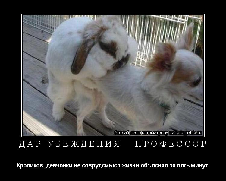 Котоматрица: дар убеждения   профессор Кроликов ,девчонки не соврут,смысл жизни объяснял за пять минут.