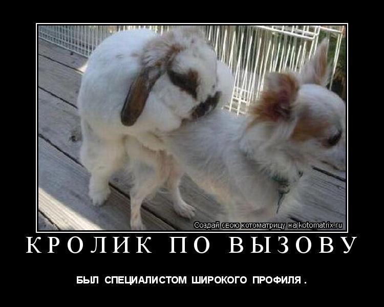 Котоматрица: кролик по вызову  БЫЛ  СПЕЦИАЛИСТОМ  ШИРОКОГО  ПРОФИЛЯ .