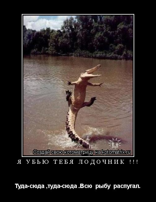 Котоматрица: я убью тебя лодочник !!! Туда-сюда ,туда-сюда .Всю  рыбу  распугал.