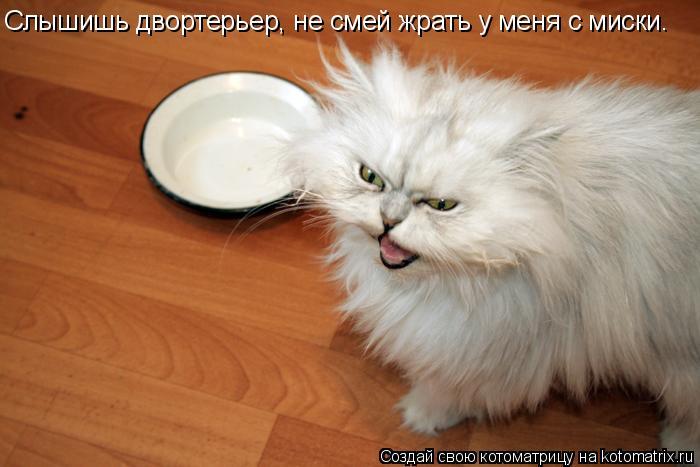 Котоматрица: Слышишь двортерьер, не смей жрать у меня с миски.