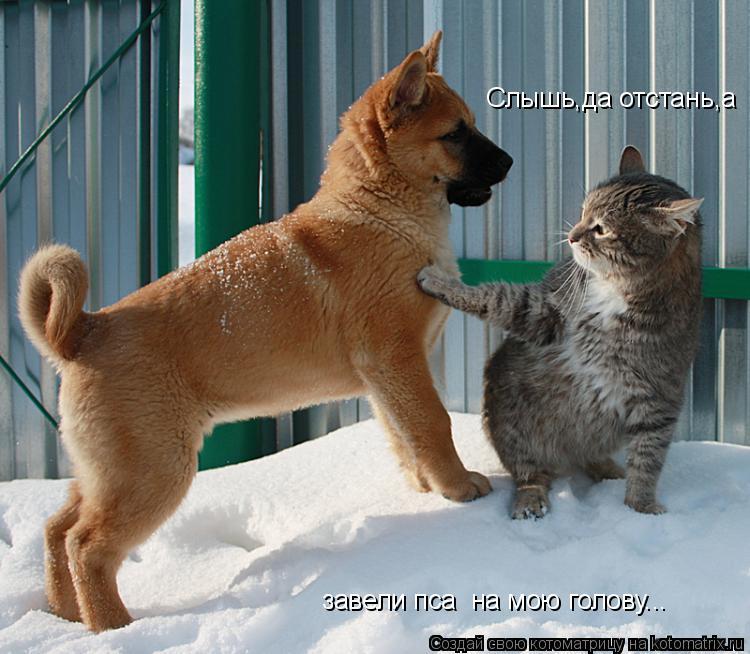 Котоматрица: Слышь,да отстань,а завели пса  на мою голову...