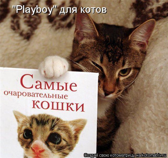 """Котоматрица: """"Playboy"""" для котов"""