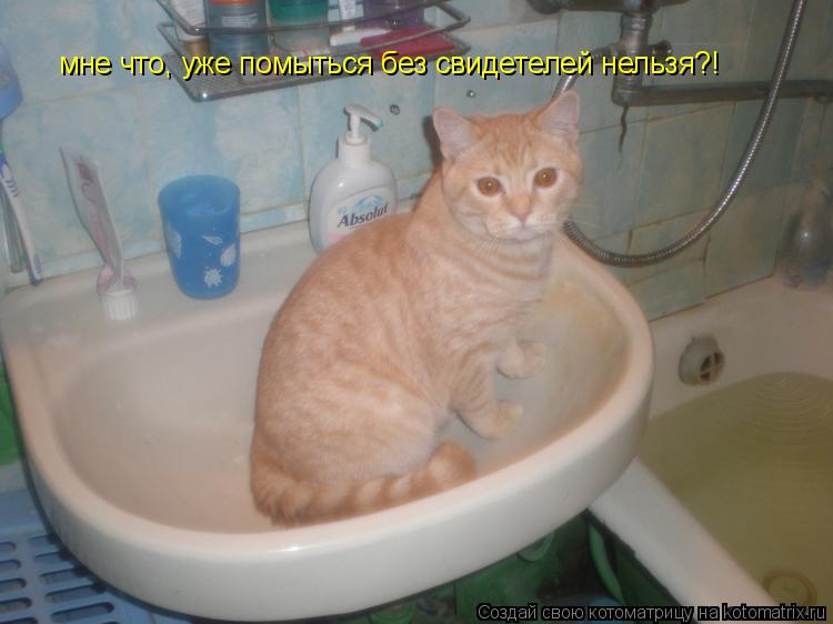 Котоматрица: мне что, уже помыться без мне что, уже помыться без свидетелей нельзя?! мне что, уже помыться без свидетелей нельзя?!