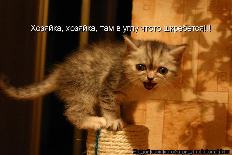 Котоматрица: Хозяйка, хозяйка, там в углу чтото шкребется!!!