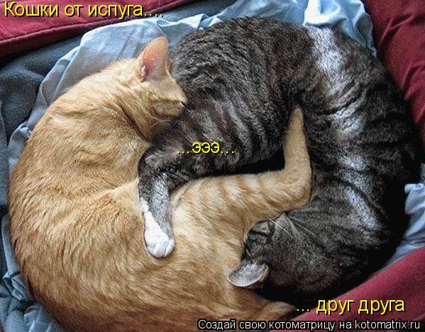 Котоматрица: Кошки от испуга.... ... друг друга ...эээ...