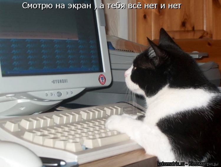 Котоматрица: Смотрю на экран , а тебя всё нет и нет