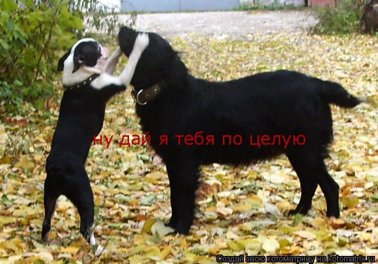 Котоматрица: ну дай я тебя по целую