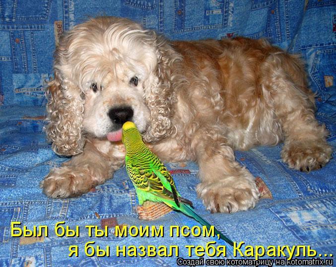 Котоматрица: Был бы ты моим псом, я бы назвал тебя Каракуль...