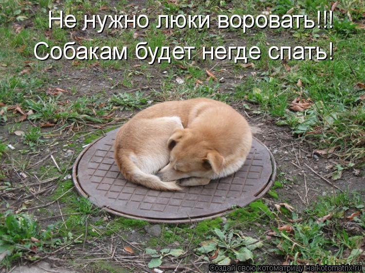 Котоматрица: Не нужно люки воровать!!! Собакам будет негде спать!