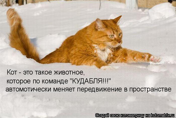 """Котоматрица: Кот - это такое животное, которое по команде """"КУДАБЛЯ!!!"""" автомотически меняет передвижение в пространстве"""