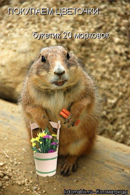 Котоматрица: ПОКУПАЕМ ЦВЕТОЧКИ букетик 20 морковок