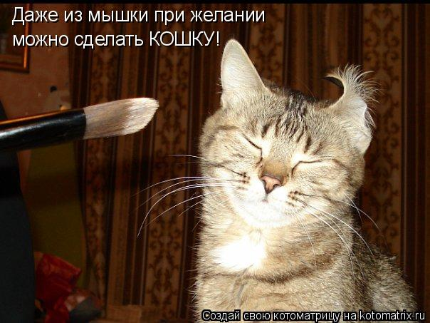 Котоматрица: Даже из мышки при желании можно сделать КОШКУ!