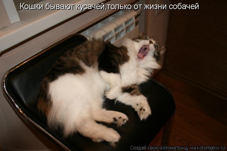 Котоматрица: Кошки бывают кусачей,только от жизни собачей