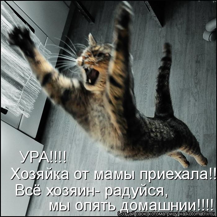 Котоматрица: УРА!!!!   Хозяйка от мамы приехала!!!!  Всё хозяин- радуйся,  мы опять домашнии!!!!