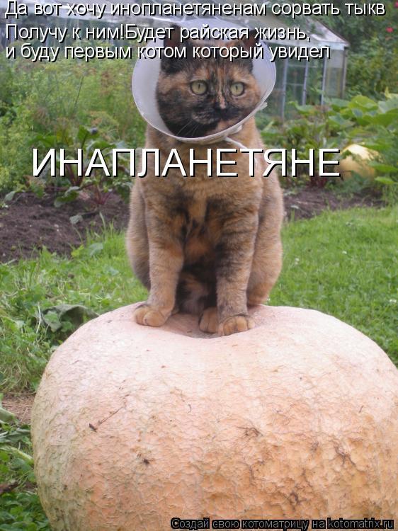 Котоматрица: Да вот хочу инопланетяненам сорвать тыкв Получу к ним!Будет райская жизнь, и буду первым котом который увидел ИНАПЛАНЕТЯНЕ