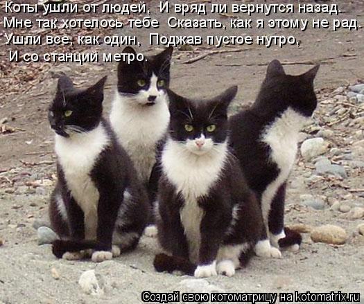 Котоматрица: Коты ушли от людей,  И вряд ли вернутся назад.   Мне так хотелось тебе  Сказать, как я этому не рад.   Ушли все, как один,  Поджав пустое нутро,    И