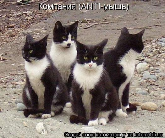 Котоматрица: Компания (ANTI-мышь)