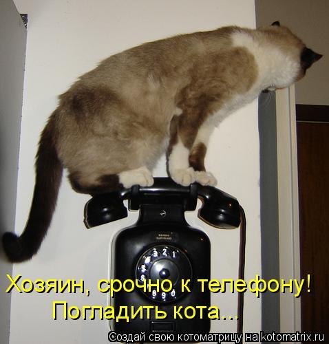 Котоматрица: Хозяин, срочно к телефону!  Погладить кота...