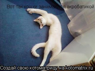Котоматрица: Вот так кошки занимаются акробатикой!