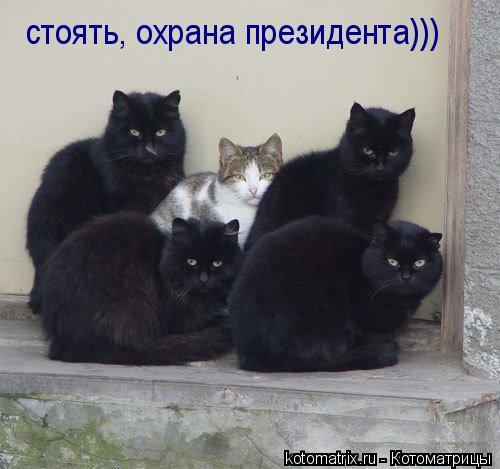 Котоматрица: стоять, охрана президента)))