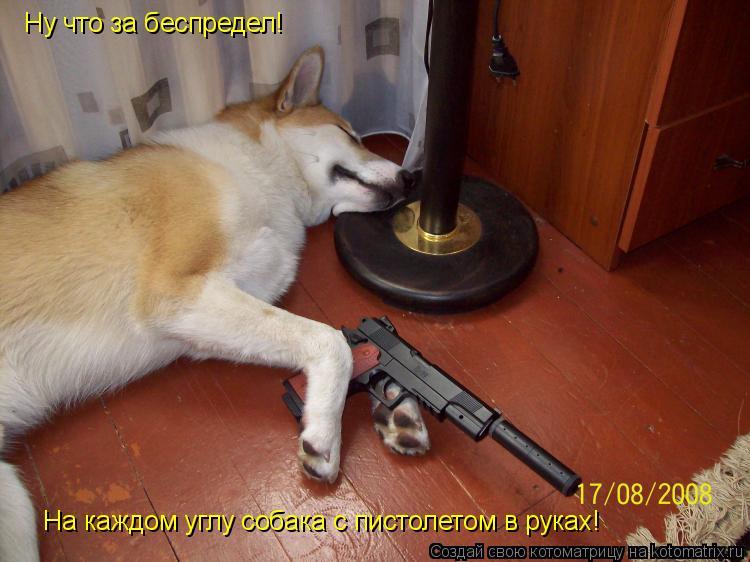 Котоматрица: Ну что за беспредел! На каждом углу собака с пистолетом в руках!