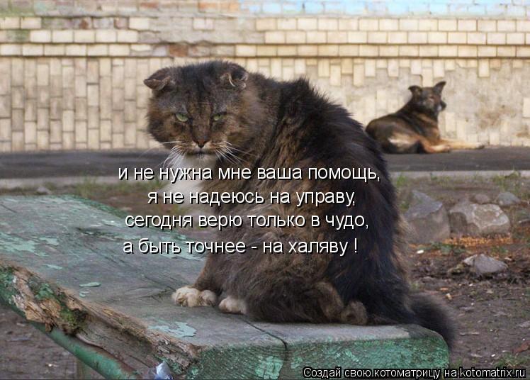 Котоматрица: и не нужна мне ваша помощь, я не надеюсь на управу, сегодня верю только в чудо, а быть точнее - на халяву !