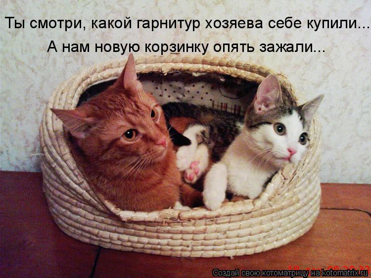 Котоматрица: Ты смотри, какой гарнитур хозяева себе купили... А нам новую корзинку опять зажали...