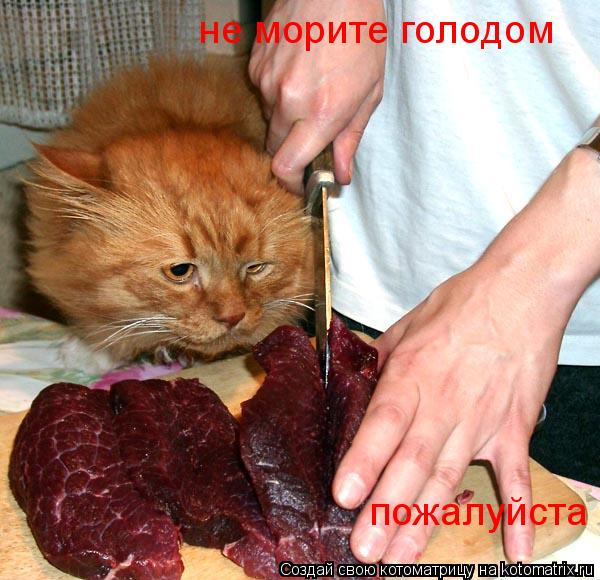Котоматрица: не морите голодом пожалуйста