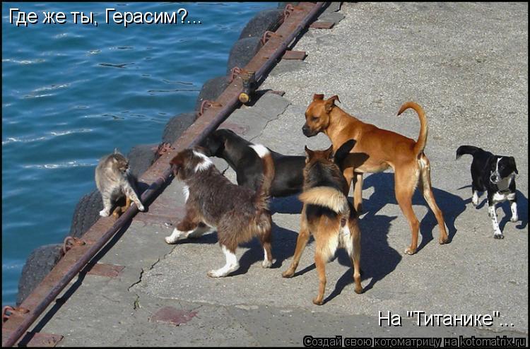 """Котоматрица: Где же ты, Герасим?... На """"Титанике""""..."""