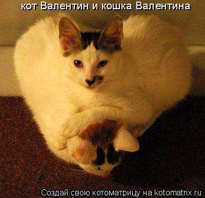 Котоматрица: кот Валентин и кошка Валентина