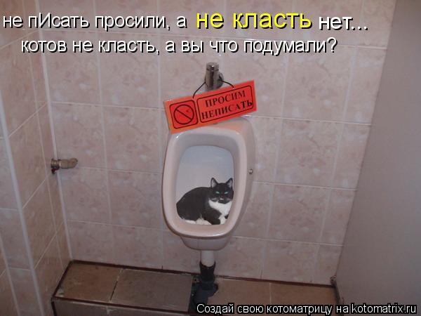 Котоматрица: не класть нет... не пИсать просили, а  котов не класть, а вы что подумали?