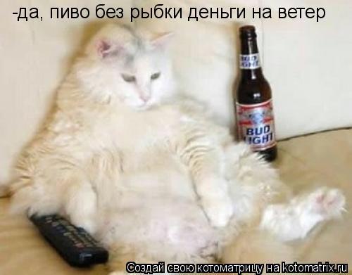 Котоматрица: -да, пиво без рыбки деньги на ветер