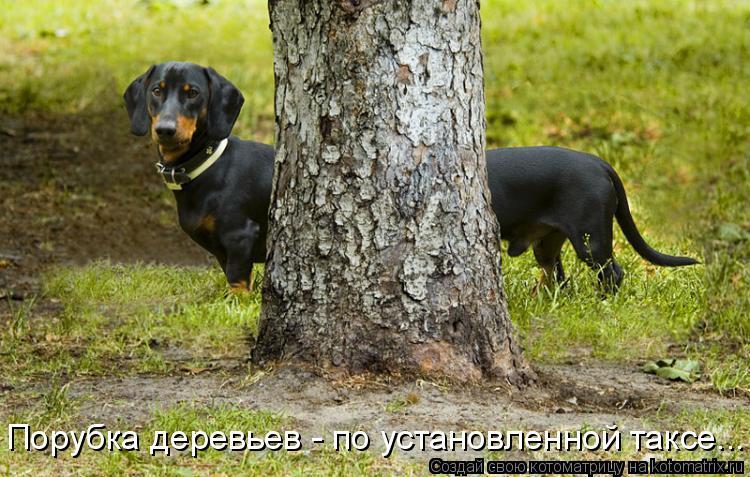 Котоматрица: Порубка деревьев - по установленной таксе...