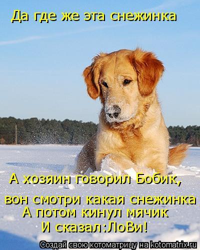 Котоматрица: Да где же эта снежинка А хозяин говорил Бобик, вон смотри какая снежинка А потом кинул мячик И сказал:ЛоВи!