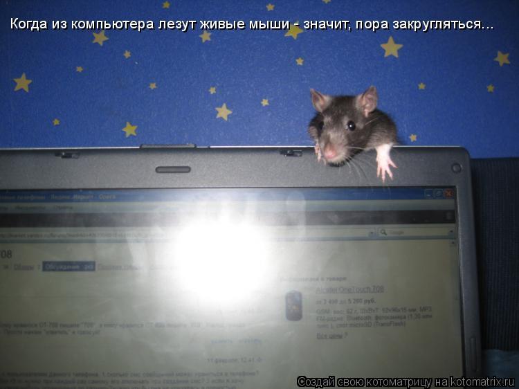 Котоматрица: Когда из компьютера лезут живые мыши - значит, пора закругляться...