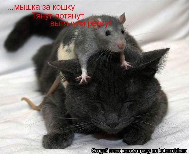 Котоматрица: ...мышка за кошку Тянут-потянут, вытянули репку!